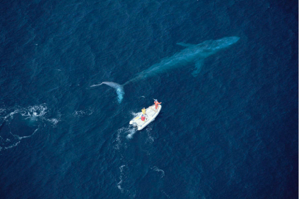 The whale could be the British public, with the boat being the government.